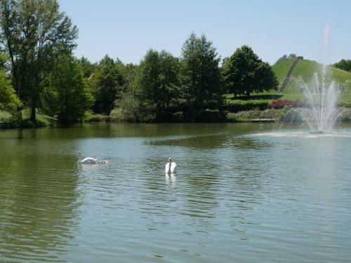 Parc odyssud à Blagnac idéal pour sorties en famille. Lieu kids friendly sur toulouse et sa région. Vue sur jet d'eau et cygnes dans le bassin