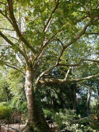 le-jardin-des-plantes-toulouse-arbre-centenaire