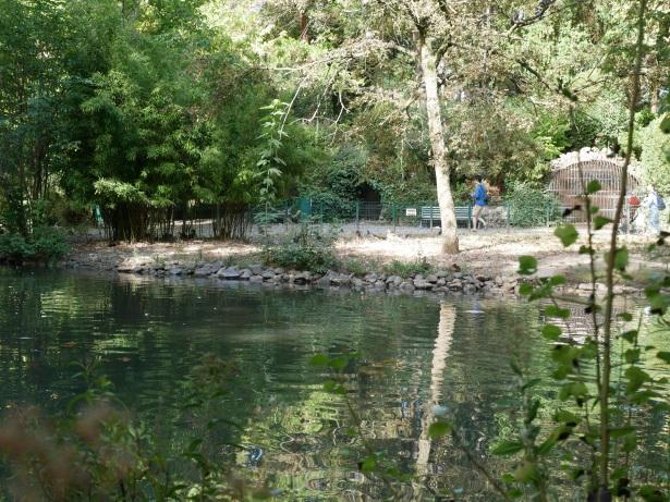 le-jardin-des-plantes-toulouse-la-mare-aux-canards