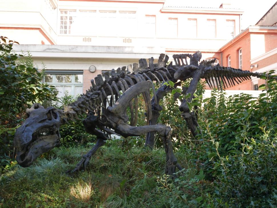 le-jardin-des-plantes-toulouse-squelette-dinosaure