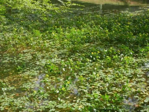 Lac-de-Flourens-6