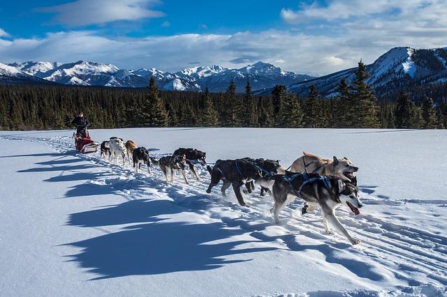 Neige-en-famille-pyrenees-traineau-chiens